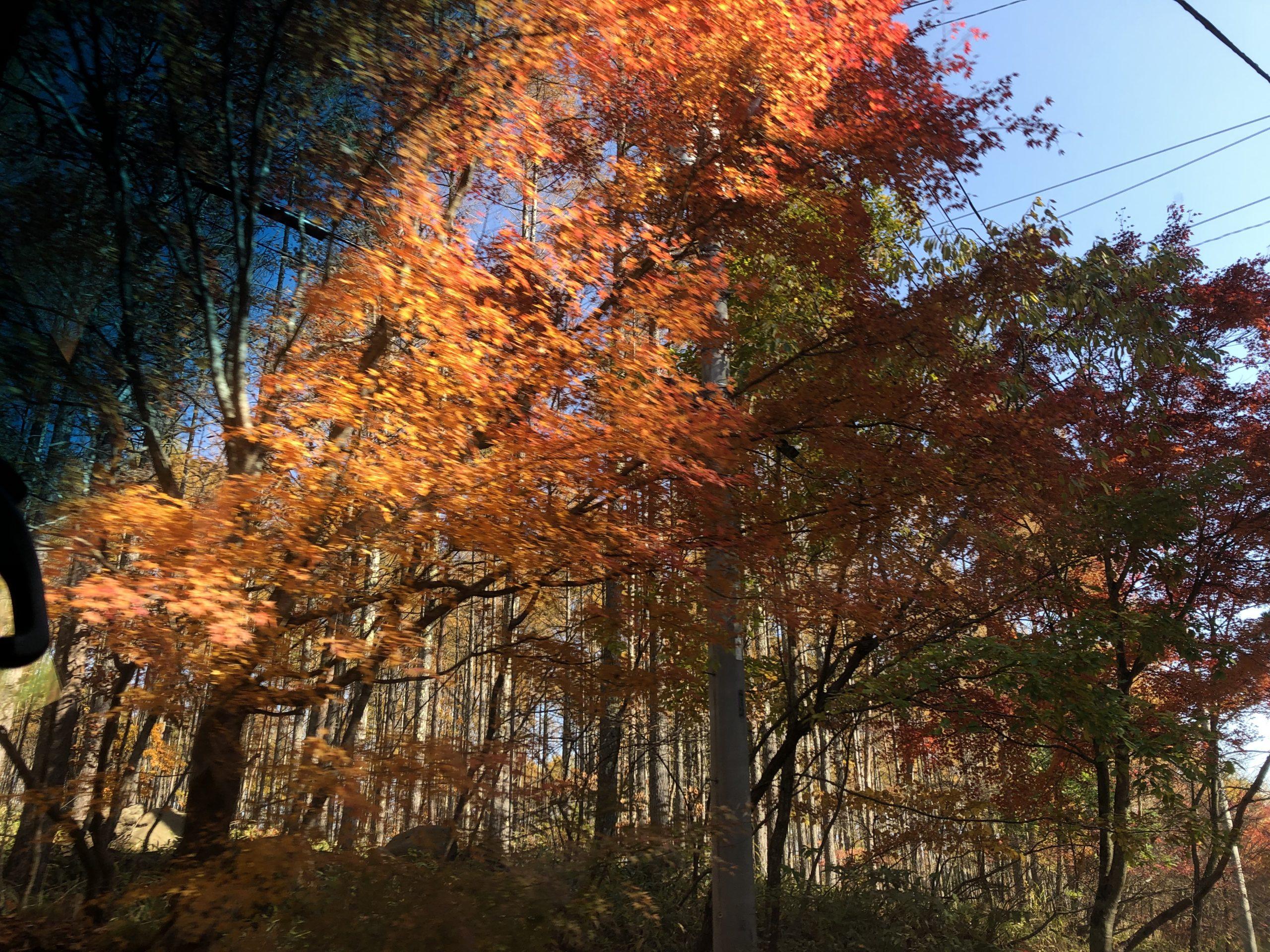 八ヶ岳の紅葉🍁