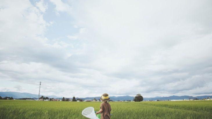 八ヶ岳で虫取りができる、おすすめの場所を【9選】ご紹介!