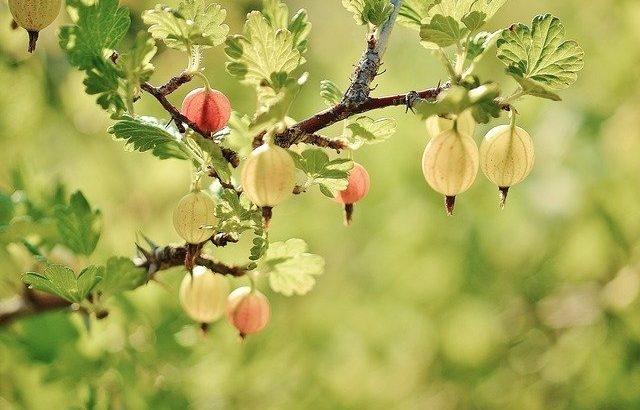 自然が豊かな八ヶ岳!さまざまな果物・野菜狩りが楽しめるスポット11選!