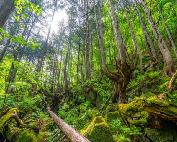 天狗岳の苔の森