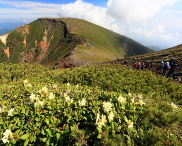 横岳 高山植物