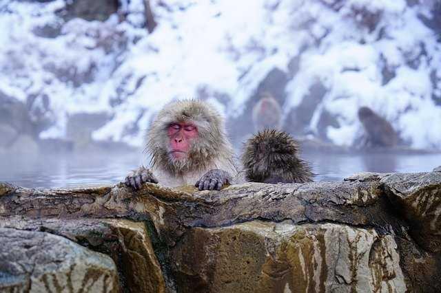 八ヶ岳でおすすめの温泉!日帰り・泊まりで楽しめる観光スポットや旅館を紹介!